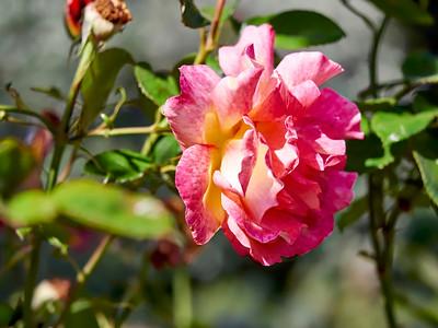 GardensLakeMerritt_2016_05_27_09-38-49_E-M1_Olympus M ZUIKO DIGITAL ED 60mm 1-2 8 Macro__5272343_©2016_StudioXEPHON