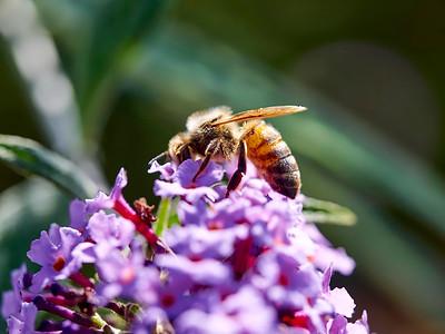 GardensLakeMerritt_2016_05_27_09-40-17_E-M1_Olympus M ZUIKO DIGITAL ED 60mm 1-2 8 Macro__5272353_©2016_StudioXEPHON