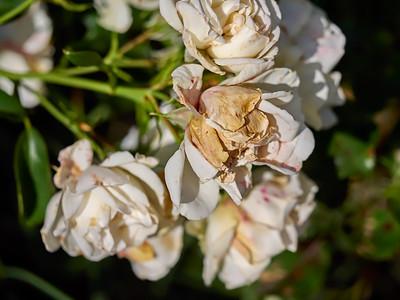 GardensLakeMerritt_2016_05_27_09-40-44_E-M1_Olympus M ZUIKO DIGITAL ED 60mm 1-2 8 Macro__5272356_©2016_StudioXEPHON