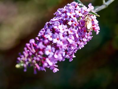 GardensLakeMerritt_2016_05_27_09-40-06_E-M1_Olympus M ZUIKO DIGITAL ED 60mm 1-2 8 Macro__5272351_©2016_StudioXEPHON