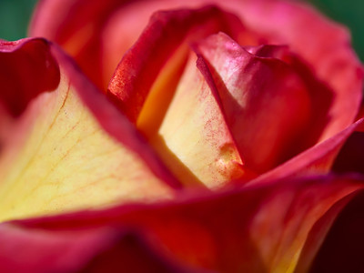 GardensLakeMerritt_2016_05_27_09-38-21_E-M1_Olympus M ZUIKO DIGITAL ED 60mm 1-2 8 Macro__5272341_©2016_StudioXEPHON