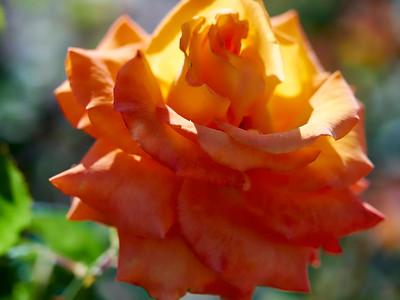GardensLakeMerritt_2016_05_27_09-36-04_E-M1_Olympus M ZUIKO DIGITAL ED 60mm 1-2 8 Macro__5272328_©2016_StudioXEPHON