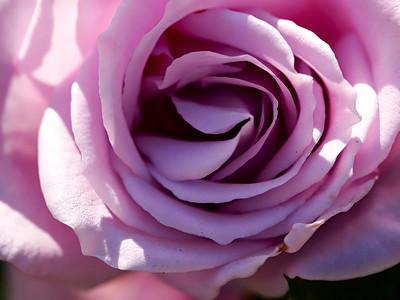 GardensLakeMerritt_2016_05_27_09-37-10_E-M1_Olympus M ZUIKO DIGITAL ED 60mm 1-2 8 Macro__5272334_©2016_StudioXEPHON