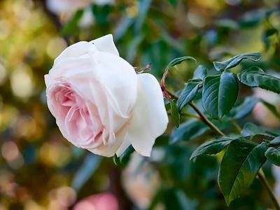 GardensLakeMerritt_2016_05_27_09-39-26_E-M1_Olympus M ZUIKO DIGITAL ED 60mm 1-2 8 Macro__5272346_©2016_StudioXEPHON