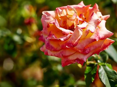 GardensLakeMerritt_2016_05_27_09-35-25_E-M1_Olympus M ZUIKO DIGITAL ED 60mm 1-2 8 Macro__5272323_©2016_StudioXEPHON
