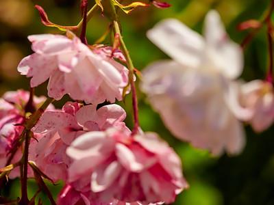 GardensLakeMerritt_2016_05_27_09-36-23_E-M1_Olympus M ZUIKO DIGITAL ED 60mm 1-2 8 Macro__5272329_©2016_StudioXEPHON