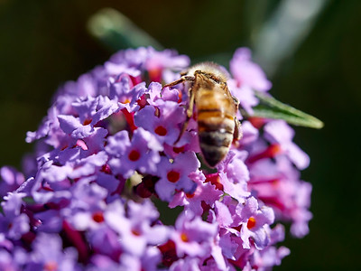 GardensLakeMerritt_2016_05_27_09-40-12_E-M1_Olympus M ZUIKO DIGITAL ED 60mm 1-2 8 Macro__5272352_©2016_StudioXEPHON