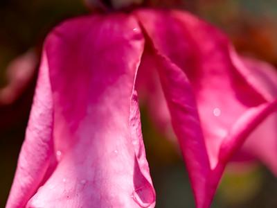 GardensLakeMerritt_2016_05_27_09-42-54_E-M1_Olympus M ZUIKO DIGITAL ED 60mm 1-2 8 Macro__5272369_©2016_StudioXEPHON