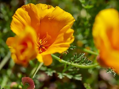 GardensLakeMerritt_2016_05_27_09-41-30_E-M1_Olympus M ZUIKO DIGITAL ED 60mm 1-2 8 Macro__5272361_©2016_StudioXEPHON