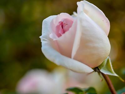 GardensLakeMerritt_2016_05_27_09-39-06_E-M1_Olympus M ZUIKO DIGITAL ED 60mm 1-2 8 Macro__5272344_©2016_StudioXEPHON
