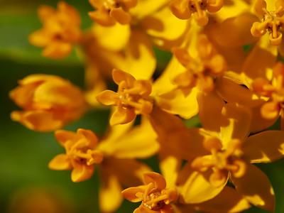GardensLakeMerritt_2016_05_27_09-42-13_E-M1_Olympus M ZUIKO DIGITAL ED 60mm 1-2 8 Macro__5272366_©2016_StudioXEPHON