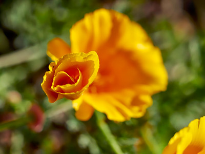 GardensLakeMerritt_2016_05_27_09-41-39_E-M1_Olympus M ZUIKO DIGITAL ED 60mm 1-2 8 Macro__5272363_©2016_StudioXEPHON