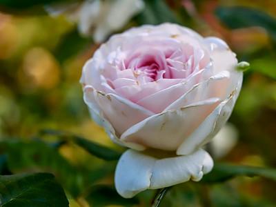 GardensLakeMerritt_2016_05_27_09-39-34_E-M1_Olympus M ZUIKO DIGITAL ED 60mm 1-2 8 Macro__5272347_©2016_StudioXEPHON