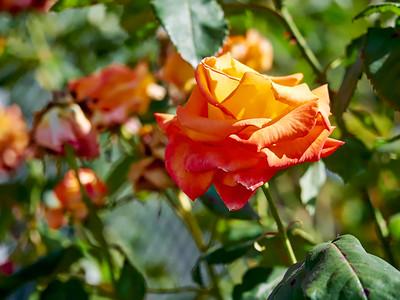 GardensLakeMerritt_2016_05_27_09-35-34_E-M1_Olympus M ZUIKO DIGITAL ED 60mm 1-2 8 Macro__5272324_©2016_StudioXEPHON