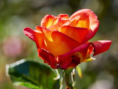 GardensLakeMerritt_2016_05_27_09-38-12_E-M1_Olympus M ZUIKO DIGITAL ED 60mm 1-2 8 Macro__5272340_©2016_StudioXEPHON