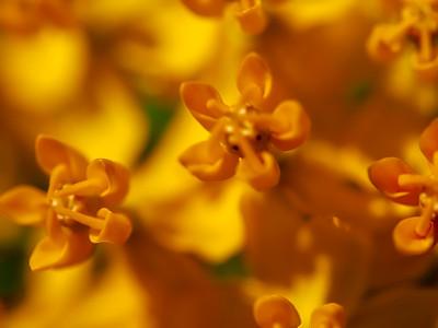 GardensLakeMerritt_2016_05_27_09-42-09_E-M1_Olympus M ZUIKO DIGITAL ED 60mm 1-2 8 Macro__5272365_©2016_StudioXEPHON