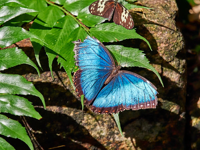 ButterflyConservatory_2016_06_10_09-21-01_E-M1_M 40-150mm F2 8 + MC-14__6105070_©2016_StudioXEPHON
