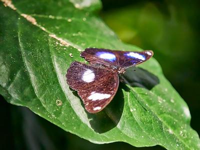 ButterflyConservatory_2016_06_10_09-18-40_E-M1_M 40-150mm F2 8 + MC-14__6105056_©2016_StudioXEPHON
