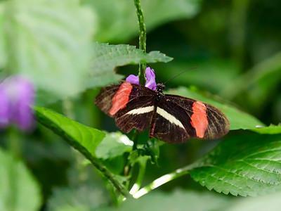 ButterflyConservatory_2016_06_10_09-17-43_E-M1_M 40-150mm F2 8 + MC-14__6105050_©2016_StudioXEPHON