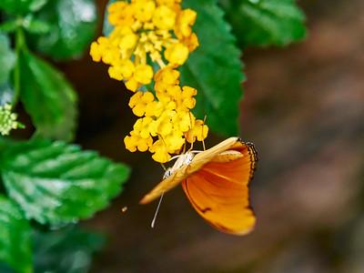 ButterflyConservatory_2016_06_10_09-16-15_E-M1_M 40-150mm F2 8 + MC-14__6105035_©2016_StudioXEPHON