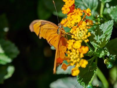 ButterflyConservatory_2016_06_10_09-16-32_E-M1_M 40-150mm F2 8 + MC-14__6105039_©2016_StudioXEPHON