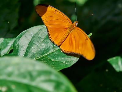 ButterflyConservatory_2016_06_10_09-19-47_E-M1_M 40-150mm F2 8 + MC-14__6105061_©2016_StudioXEPHON