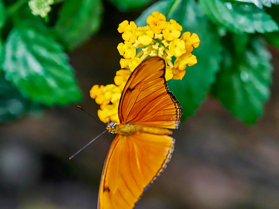 ButterflyConservatory_2016_06_10_09-16-10_E-M1_M 40-150mm F2 8 + MC-14__6105034_©2016_StudioXEPHON