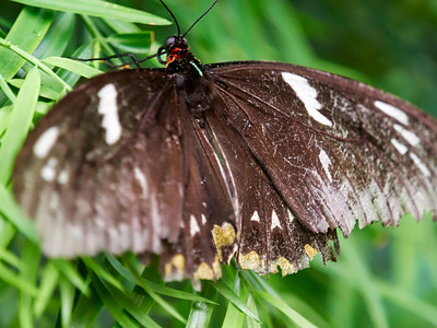 ButterflyConservatory_2016_06_10_09-17-16_E-M1_M 40-150mm F2 8 + MC-14__6105045_©2016_StudioXEPHON