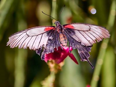 ButterflyConservatory_2016_06_10_09-21-42_E-M1_M 40-150mm F2 8 + MC-14__6105075_©2016_StudioXEPHON