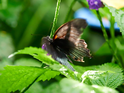 ButterflyConservatory_2016_06_10_09-17-28_E-M1_M 40-150mm F2 8 + MC-14__6105048_©2016_StudioXEPHON