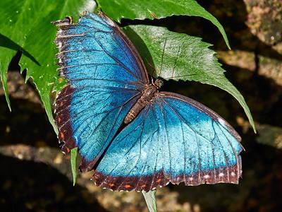 ButterflyConservatory_2016_06_10_09-21-14_E-M1_M 40-150mm F2 8 + MC-14__6105073_©2016_StudioXEPHON