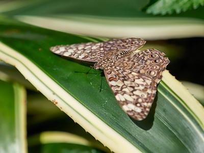 ButterflyConservatory_2016_06_10_09-16-23_E-M1_M 40-150mm F2 8 + MC-14__6105037_©2016_StudioXEPHON