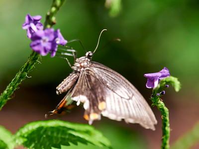 ButterflyConservatory_2016_06_10_09-15-48_E-M1_M 40-150mm F2 8 + MC-14__6105032_©2016_StudioXEPHON