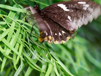 ButterflyConservatory_2016_06_10_09-17-21_E-M1_M 40-150mm F2 8 + MC-14__6105046_©2016_StudioXEPHON