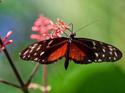 ButterflyConservatory_2016_06_10_09-20-13_E-M1_M 40-150mm F2 8 + MC-14__6105066_©2016_StudioXEPHON