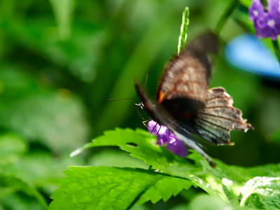 ButterflyConservatory_2016_06_10_09-17-30_E-M1_M 40-150mm F2 8 + MC-14__6105049_©2016_StudioXEPHON