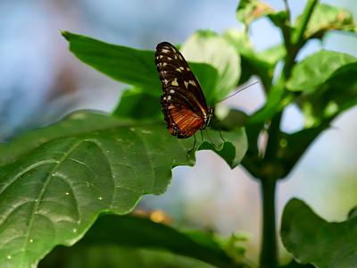 ButterflyConservatory_2016_06_10_09-18-35_E-M1_M 40-150mm F2 8 + MC-14__6105055_©2016_StudioXEPHON