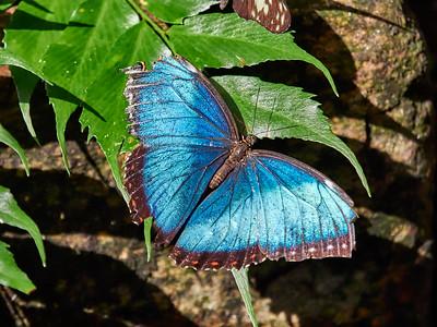 ButterflyConservatory_2016_06_10_09-21-05_E-M1_M 40-150mm F2 8 + MC-14__6105071_©2016_StudioXEPHON