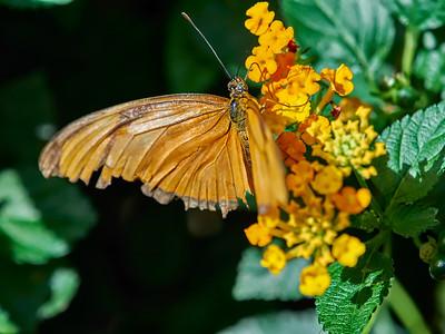 ButterflyConservatory_2016_06_10_09-16-35_E-M1_M 40-150mm F2 8 + MC-14__6105041_©2016_StudioXEPHON