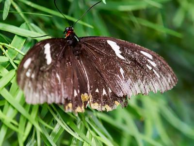ButterflyConservatory_2016_06_10_09-17-23_E-M1_M 40-150mm F2 8 + MC-14__6105047_©2016_StudioXEPHON