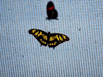 ButterflyConservatory_2016_06_10_09-18-15_E-M1_M 40-150mm F2 8 + MC-14__6105052_©2016_StudioXEPHON