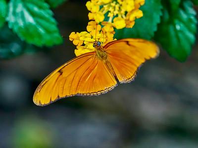 ButterflyConservatory_2016_06_10_09-16-07_E-M1_M 40-150mm F2 8 + MC-14__6105033_©2016_StudioXEPHON