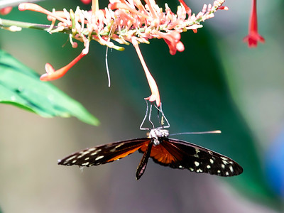 ButterflyConservatory_2016_06_10_09-19-17_E-M1_M 40-150mm F2 8 + MC-14__6105060_©2016_StudioXEPHON