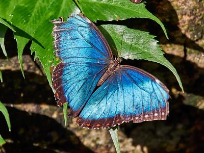 ButterflyConservatory_2016_06_10_09-21-09_E-M1_M 40-150mm F2 8 + MC-14__6105072_©2016_StudioXEPHON