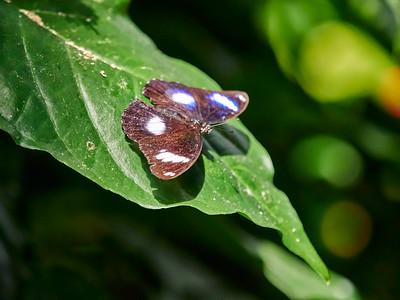 ButterflyConservatory_2016_06_10_09-18-50_E-M1_M 40-150mm F2 8 + MC-14__6105059_©2016_StudioXEPHON