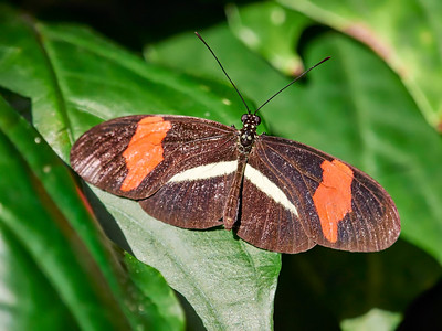 ButterflyConservatory_2016_06_10_09-20-50_E-M1_M 40-150mm F2 8 + MC-14__6105069_©2016_StudioXEPHON