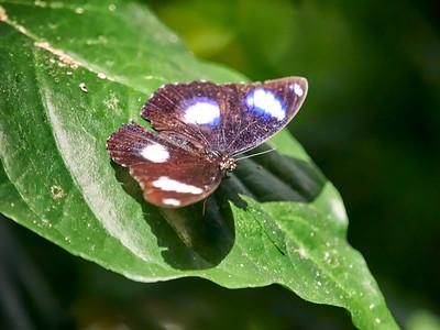 ButterflyConservatory_2016_06_10_09-18-44_E-M1_M 40-150mm F2 8 + MC-14__6105058_©2016_StudioXEPHON