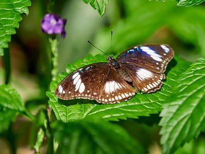 ButterflyConservatory_2016_06_10_09-16-59_E-M1_M 40-150mm F2 8 + MC-14__6105043_©2016_StudioXEPHON
