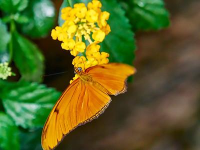 ButterflyConservatory_2016_06_10_09-16-17_E-M1_M 40-150mm F2 8 + MC-14__6105036_©2016_StudioXEPHON