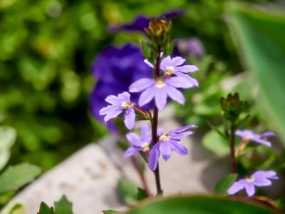FloralClock_2016_06_10_13-50-23_E-M1_Olympus M ZUIKO DIGITAL ED 60mm 1-2 8 Macro__6105866_©2016_StudioXEPHON
